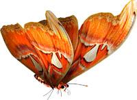 фото бабочки на белом фоне