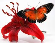 бабочка не цветке, красивое фото