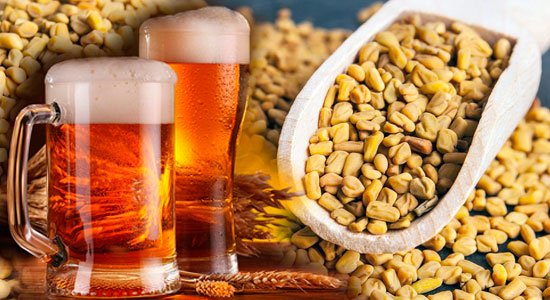 пажитник и пиво